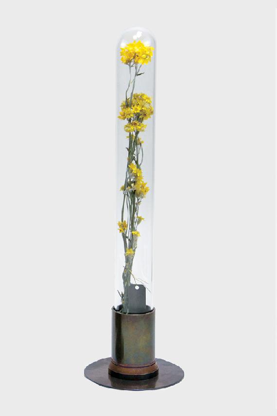 herbarium-en-laiton-rouille
